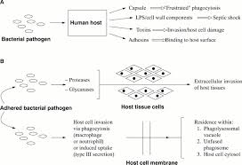 mechanisms of bacterial pathogenicity postgraduate medical journal