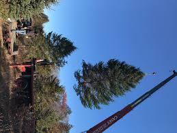 spruce acres farm donates christmas trees for washington square