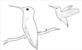pictures how to draw a bird easy drawings art gallery