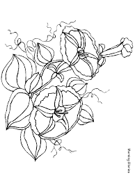 pokemon coloring pages white kyurem morningglories flowers coloring pages coloring book