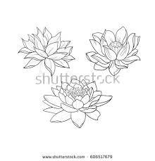 sketch beautiful lotuses graceful ornament on stock vector