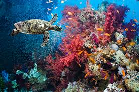 introduction to marine ecosystems