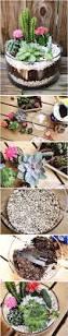 best 25 outdoor cactus garden ideas on pinterest cactus garden