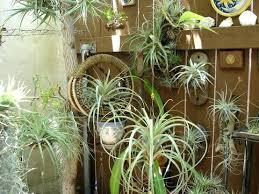 explore mini terrarium hanging terrarium and more indoor vertical