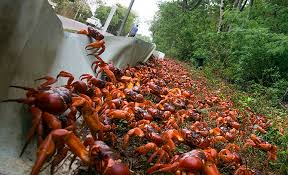 the crazy ants of christmas island momentum