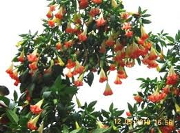 beautiful flowers pictures beautiful indian flowers and trees