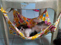 photos of diy cat hammock diy cat hammock ideas u2013 porch design