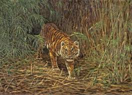 tiger in the jungle uk