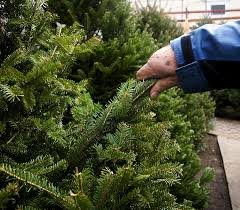 tips on buying a fresh christmas tree so you get more green for