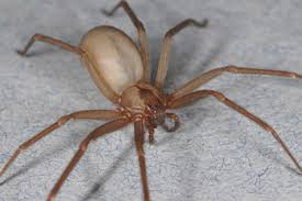 types of spiders spider facts