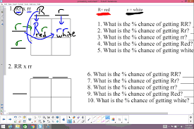 punnett square practice video  youtube with punnett square practice video from youtubecom