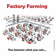 factory farming you become what you eat by frits ahlefel u2026 flickr