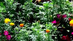 low cost u0026 low maintenance flower garden youtube