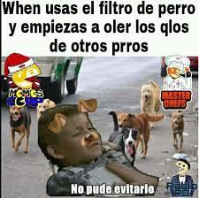 Ha Meme - pin by fabiola on equisde pinterest memes meme and humour