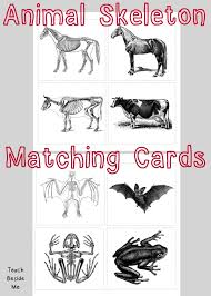 animal skeleton matching cards teach beside me