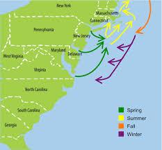 Nj Path Map Striped Bass Migration Path