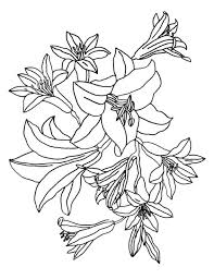 lily flower garden coloring pages flower coloring pages of