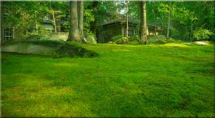 moss and and gardens