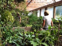 Permaculture Urban Garden Three Sisters Bioshelter Permaculture Farming Pinterest
