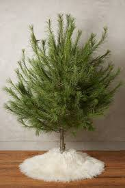 Faux Fur Christmas Tree Skirt December 2014 U2013 Page 3 U2013 The Gloucester Clam