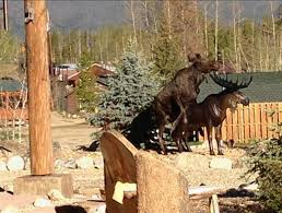 amorous elk attempts to mate with bronze statue ny daily news