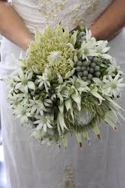 native plants of australia best 25 australian flowers ideas on pinterest australian native