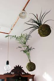 hanging plant ideas indoor with hanging plant ideas free lovely