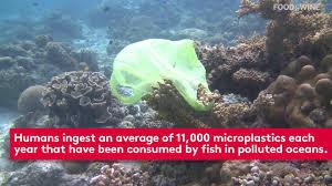halloween reef transparent background how ikea is fighting food waste food u0026 wine