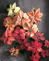 crepe paper poinsettia martha stewart trees and paper