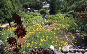 Slo Botanical Garden by Tuohey Mote Garden In Atascadero Is Colorful Yet Drought Friendly