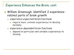 experience dependent brain growth first two years biosocial development ppt video online download