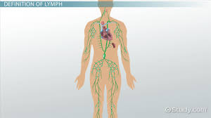 what is a lymph definition u0026 anatomy video u0026 lesson