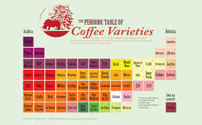 Periodic Table Coffee Table Infographic Periodic Table Of Coffee Varieties Or Cultivars