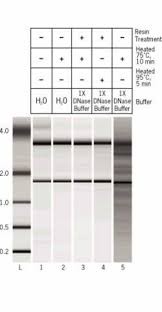 turbo dna free kit thermo fisher scientific
