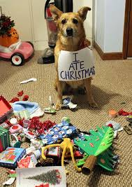 Christmas Dog Meme - 15 dogs and cats that destroyed christmas bored panda