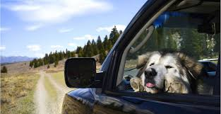 Pet Ready Exterior Doors by Dogs In Cars Today Com