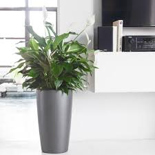 peace lily peace lily plant potted in elegant rondo planter