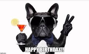 Happy Birthday Meme Dog - image tagged in cool dog birthday imgflip