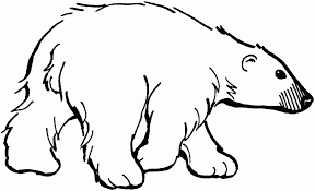 polar bears coloring pages for bear coloring pages shimosoku biz