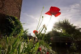 8 tips on garden photography apogee photo magazine