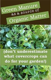 green manure as a source of organic matter cover cropping