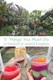 5 things you have to experience at pandora animal kingdom my