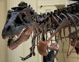 325 dinos u0026 fossils images extinct fossils