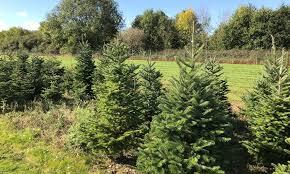 newbury christmas tree farm reading groupon