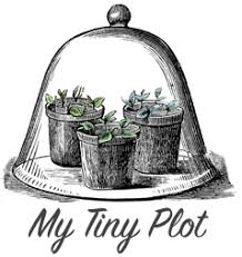 my tiny plot a blog about vegetable gardening
