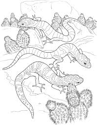 coloring pages animals lizard coloring pages lizard coloring