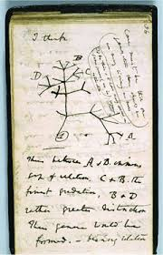 charles darwin tree of life sketch image quote 1837
