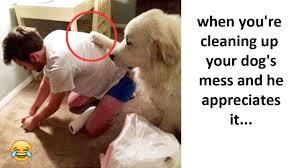 Hilarious Animal Memes - most hilarious animal memes part 2 youtube