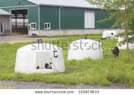 Calf Hutches For Sale Calf Hutches Stock Images Royalty Free Images U0026 Vectors