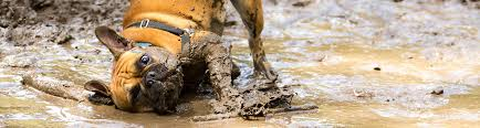 Mud Rugs For Dogs Home Renovation Ideas For Pet Owners Farmers Insurance